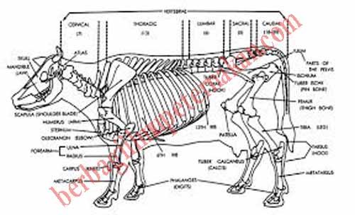 84 Gambar Rangka Hewan Kuda Gratis Terbaik