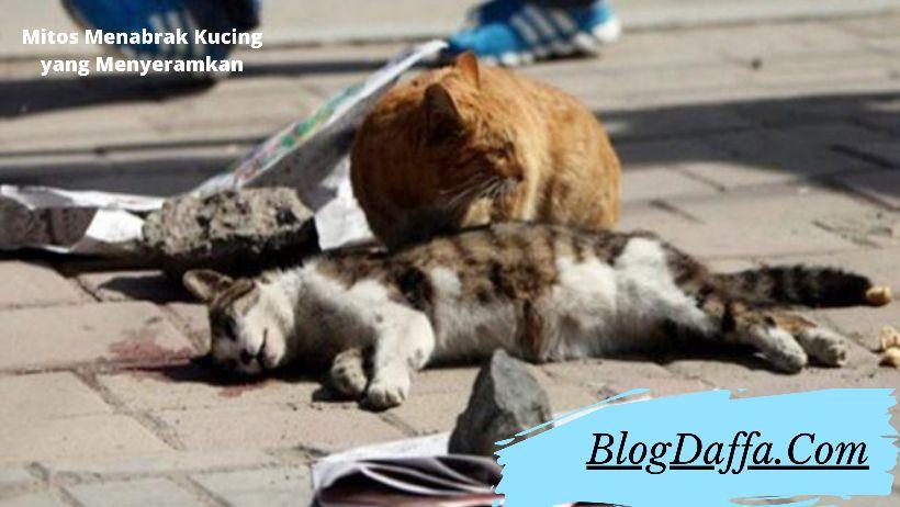 Mitos menabrak kucing paling menyeramkan