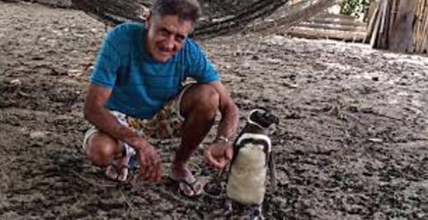 Penguin Datang Berjumpa Manusia yang Pernah Menyelamatkannya Setiap Tahu