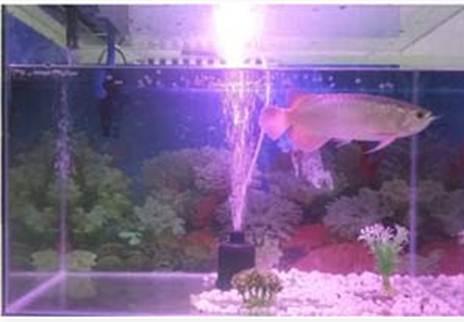 Memilih Ikan Untuk Digabung Dengan Arwana Tempat Kita Berbagi Ilmu