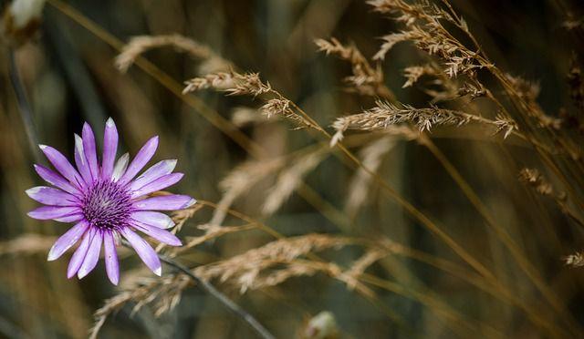 hoa dại đẹp nhất 8