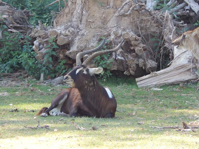 Parco Natura Viva - Safari
