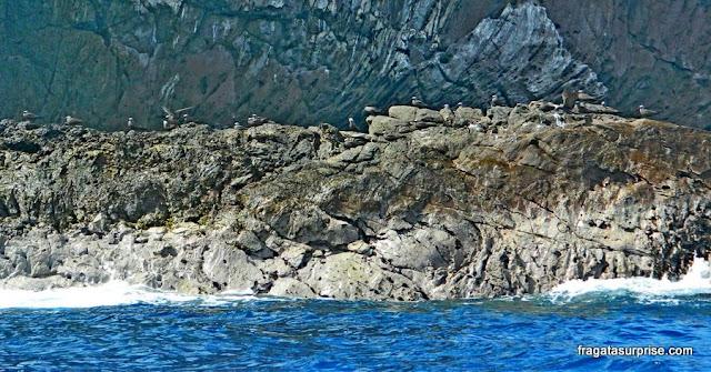 Aves marinhas nos motu da Ilha de Páscoa