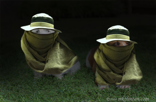 The Bayou Boys dressed as beekeepers for Halloween