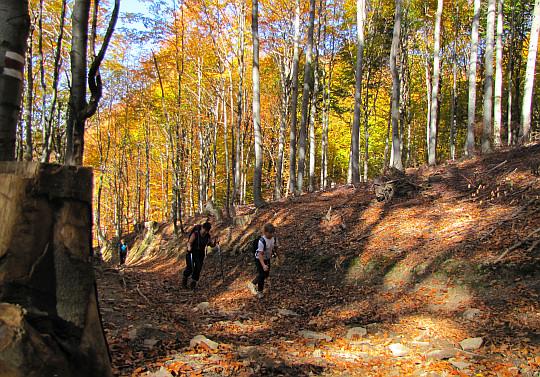 Leśna wędrówka na szczyt Koziego Żebra.