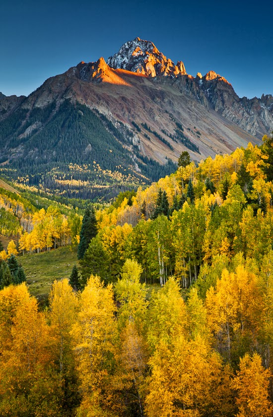Fall Aspens Wallpaper Critter Sitter S Blog More Fall Foliage In Colorado