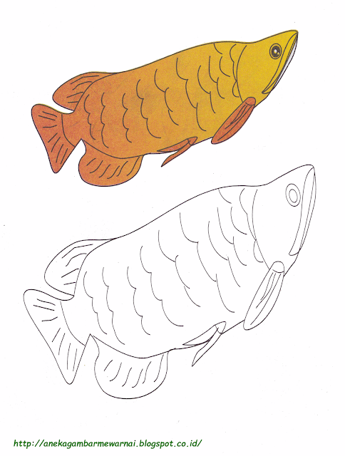 Gambar Mewarnai Ikan Arwarna