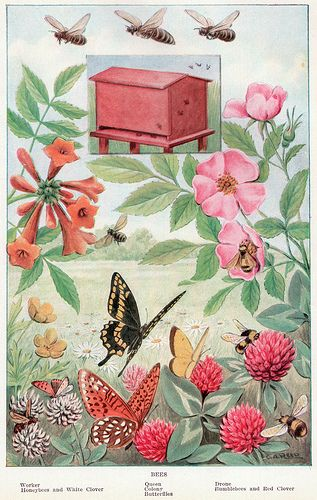 1917 illustration of bees in a garden and hive
