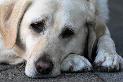 Fixing Dog depression