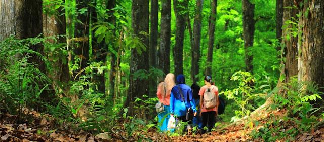 Hutan Seseot Lombok Mengajakmu Berpetualang!