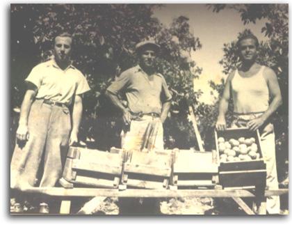 קטיף הדרים מאלבומה של משפחת אוסובסקי
