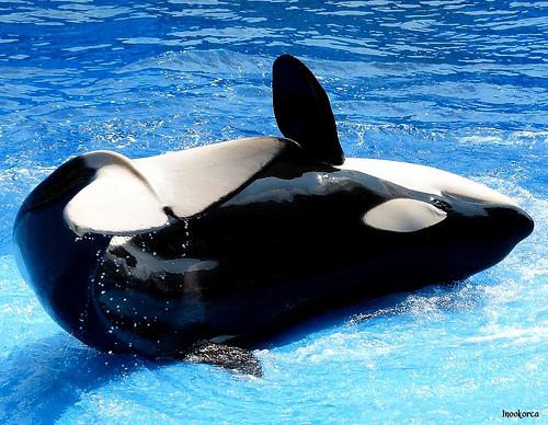 Related Keywords & Suggestions for nalani orca