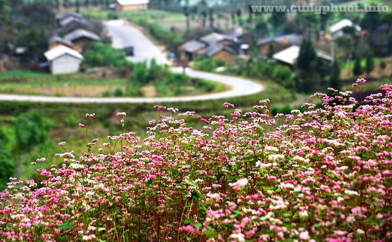 Sung la valley in dong van ha giang