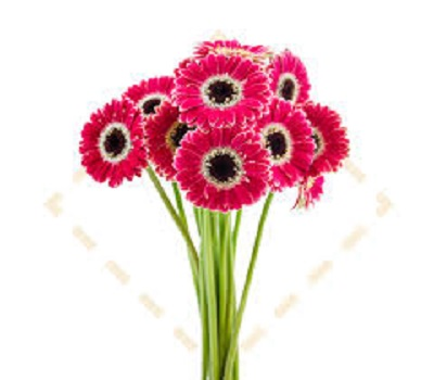 Beautiful Flower Images Hd Download For Wallpaper Photo Pics Iamhja