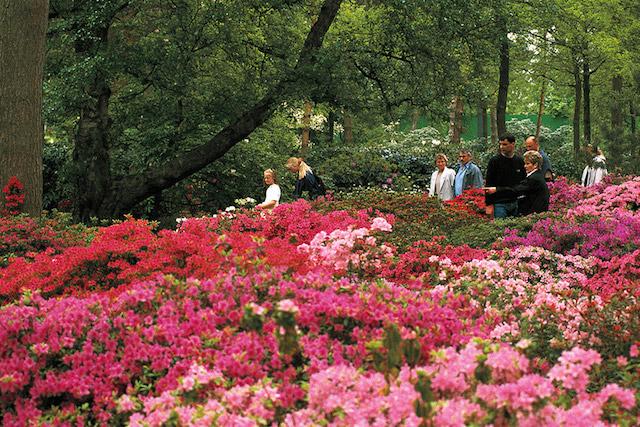 Passeio pelo Parque Rododendros