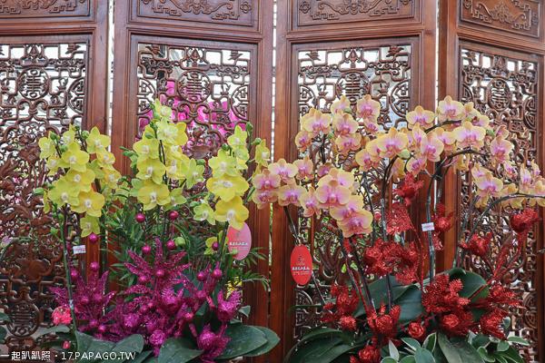 《台中.后里》萌芳花卉農場|五彩繽紛蝴蝶蘭花海|多肉植物|園藝資材|各種花卉植物|免費參觀