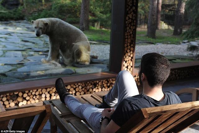 Donc, si vous souhaitez avoir du champagne avec un ours polaire, faites des réservations!