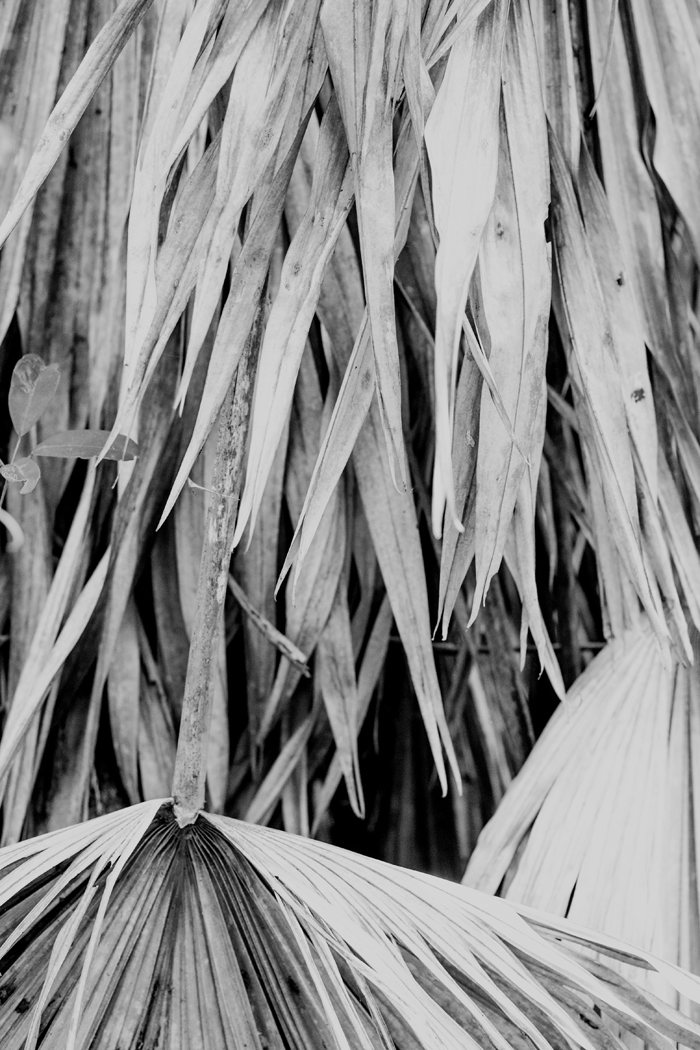 black and white palm frond