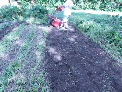 Husband tilling the empty spot in garden.