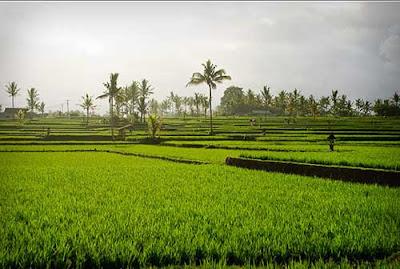 Desa Ubud