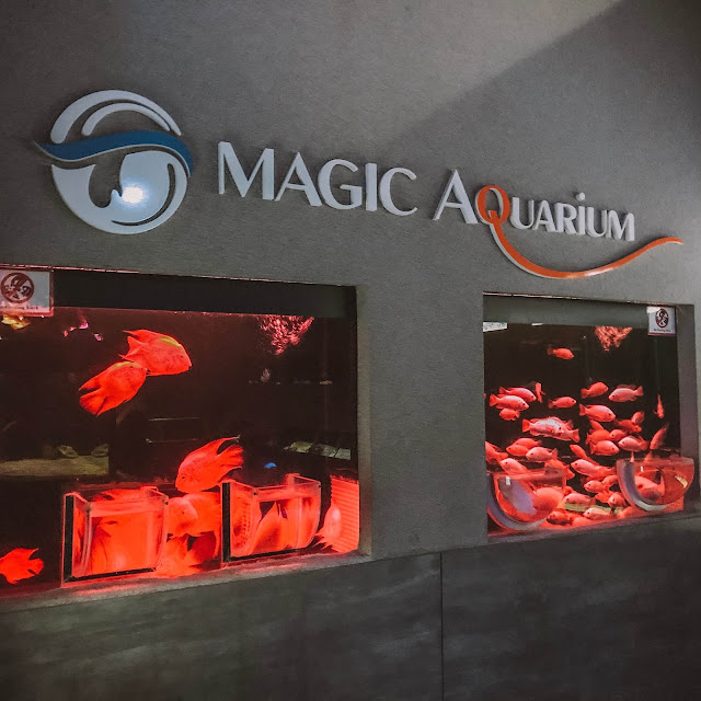 Magical Aquarium in The Shore Ocenarium Melaka