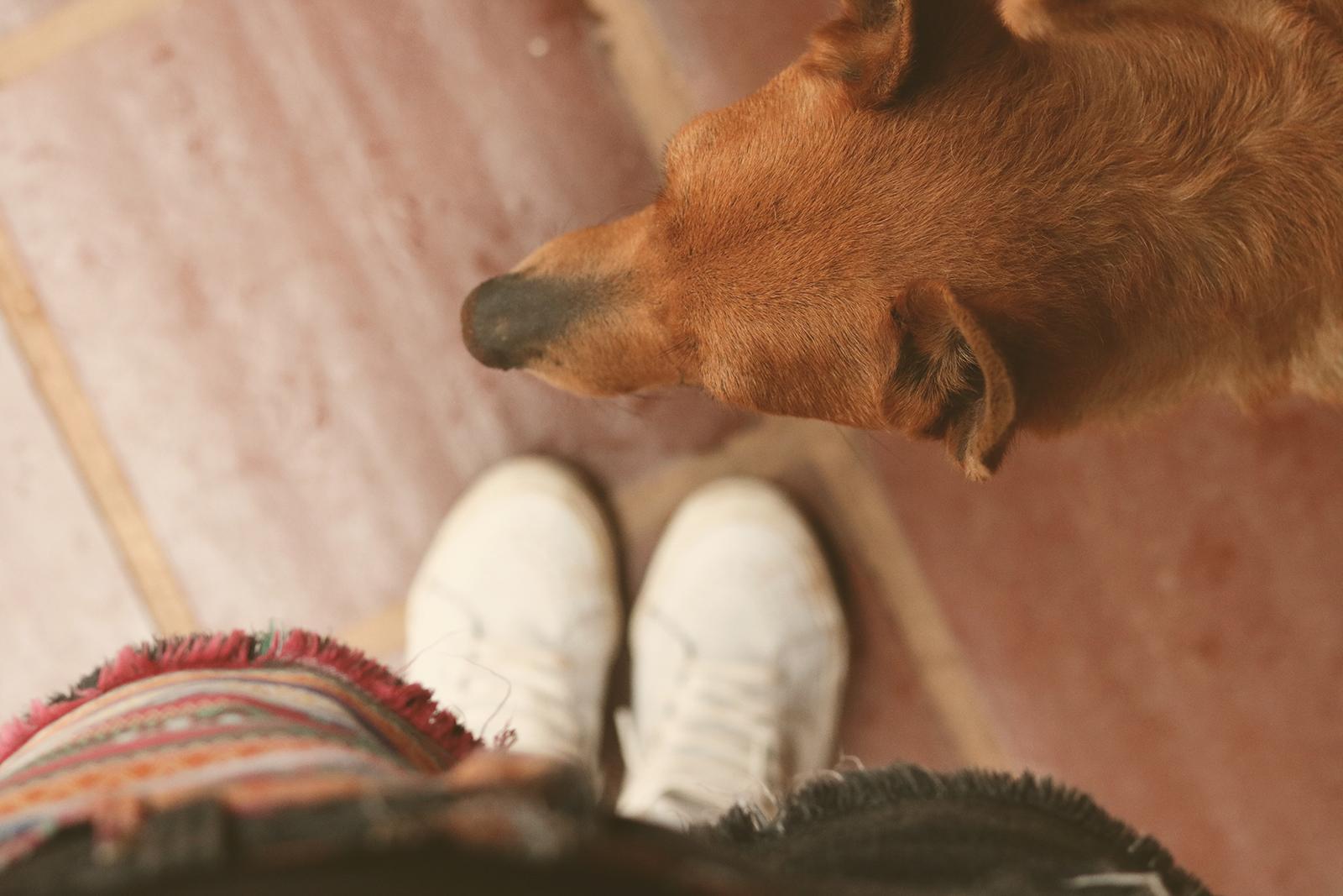 garota e seu cachorro