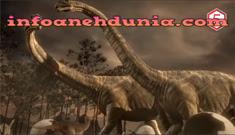 http://www.infoanehdunia.com/2017/07/5-hewan-terbesar-dan-terpanjang-di-dunia.html