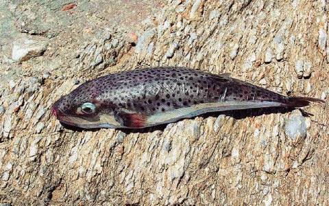 Ψάρια της θαλάσσιας ιστοσελίδας dating