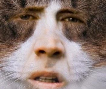 Image Gallery nicolas cage cat face
