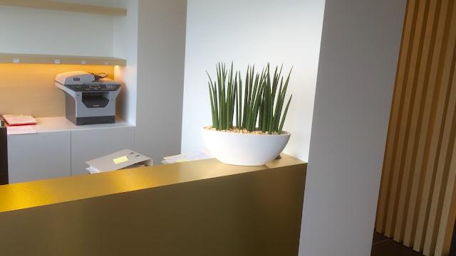 Planten huren voor bedrijven kantoorruimte beurzen events feestzaal en feesten. Verhuur van kunstplanten hangplanten kamerplanten bloemen op lange termijn in België