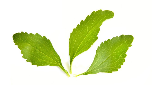 Stevia ou estévia