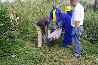 Man electrocuted while trying to steal electric cable in