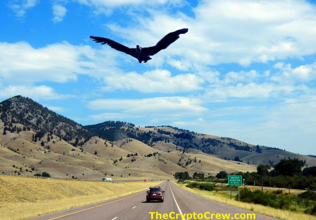 Thunderbird Sighting In Montana The Crypto Crew