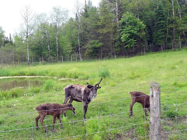 park omega elk