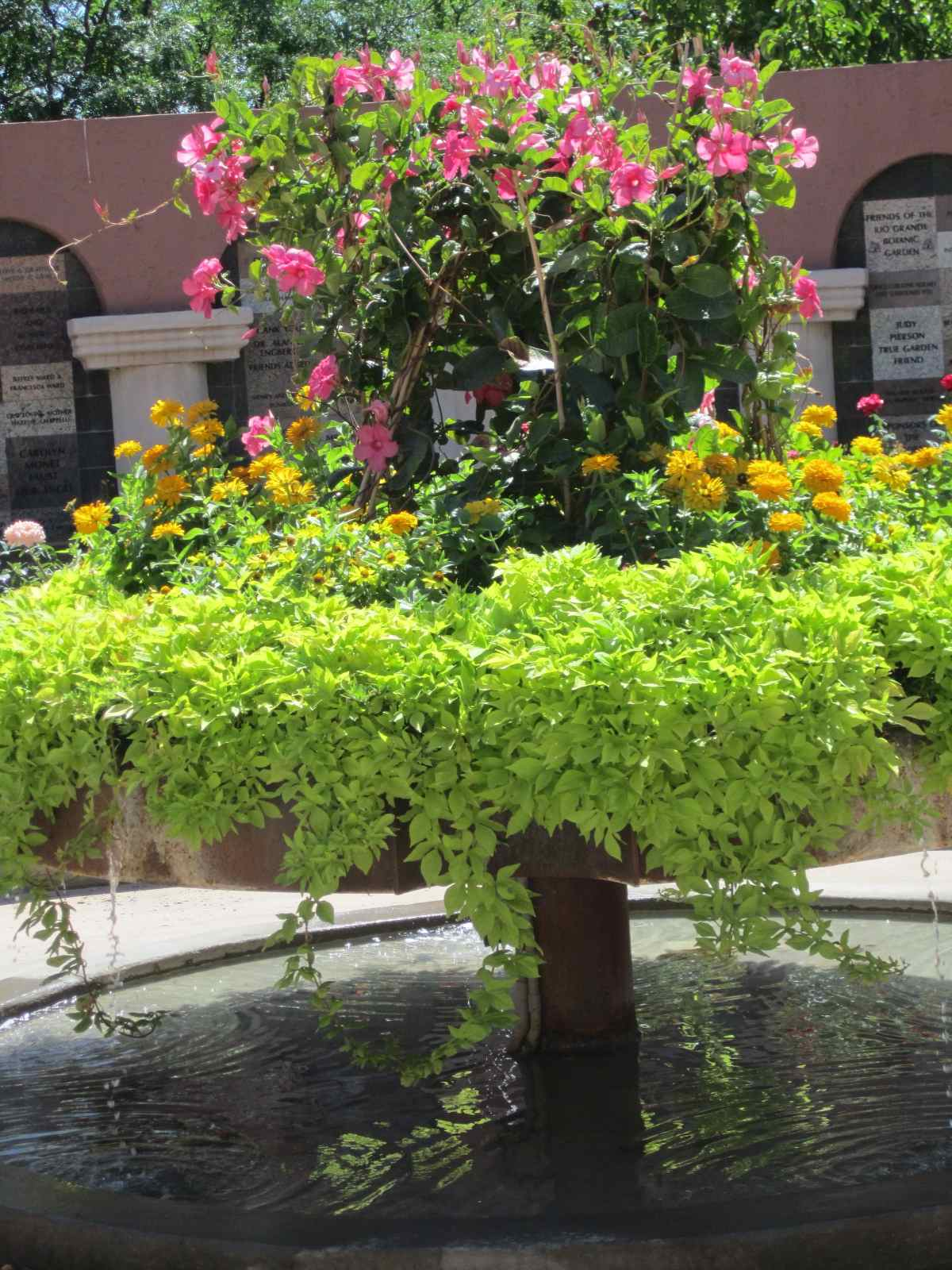 Roses And Other Gardening Joys: Albuquerque Botanic Garden