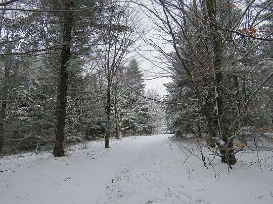 Las przed polaną Jaworz.