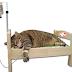 Fluidoterapia en animales, cuales son y como seleccionar el mas adecuado