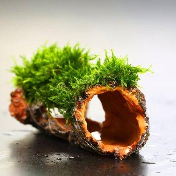 đồ chơi thủy sinh được buộc rêu