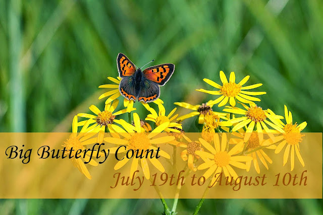 Big Butterfly Count 2014