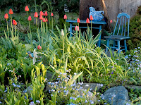 A untamed garden of spring tulips and blue forget-me-nots, adorned with an old wooden child's table and chair.