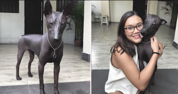 Rare Dog Goes Viral Because People Think It's A Statue