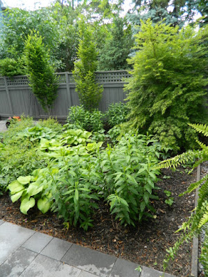 New Danforth Greektown perennial garden by Garden muses-not another Toronto gardening blog