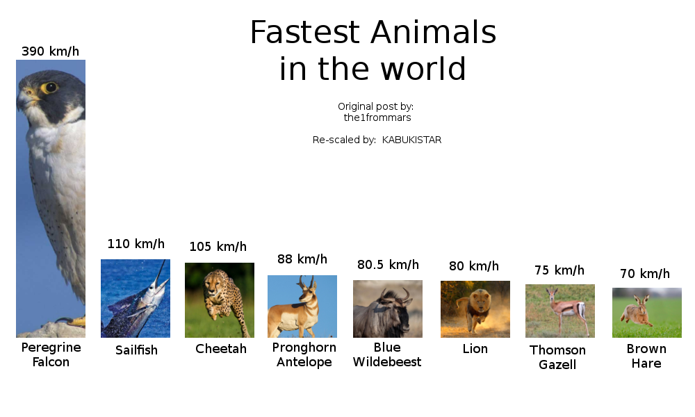 Fastest animals in the world, properly scaled