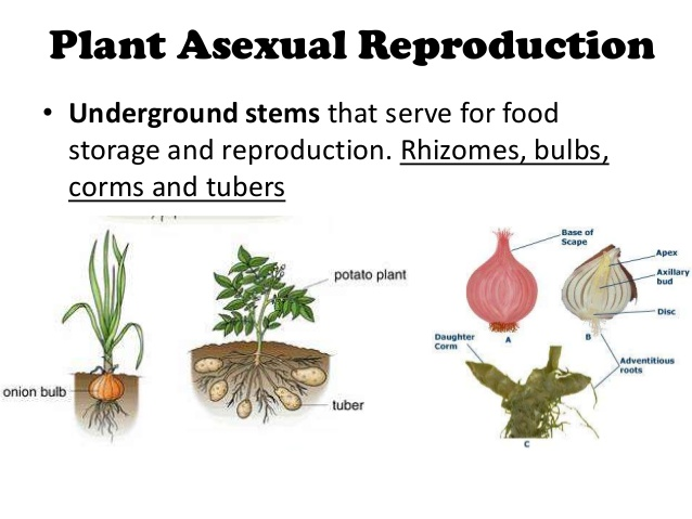 PLANT REPRODUCTION | MY ENGLISH AND SCIENCE