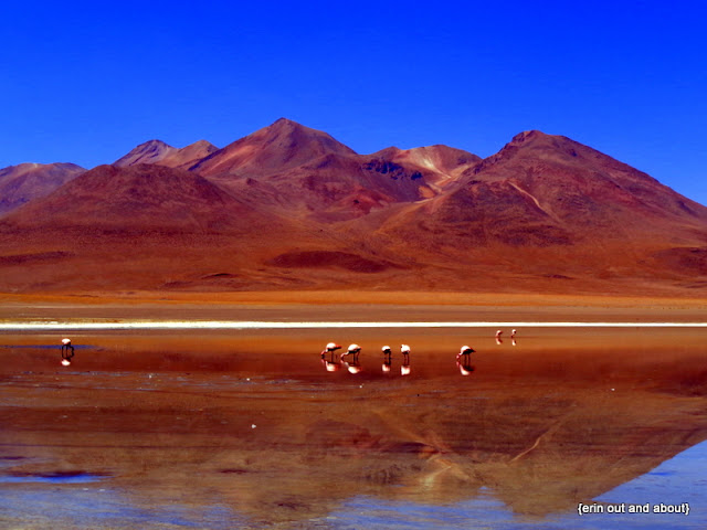 {ErinOutandAbout} Visit Bolivia: Flamingos