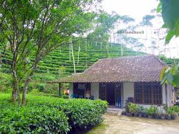 Profil Perpustakaan Desa Ngargosari, Desa Ngargosari, Kulonprogo Yogyakarta