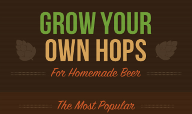 Grow Your Own Hops For Homemade Beer