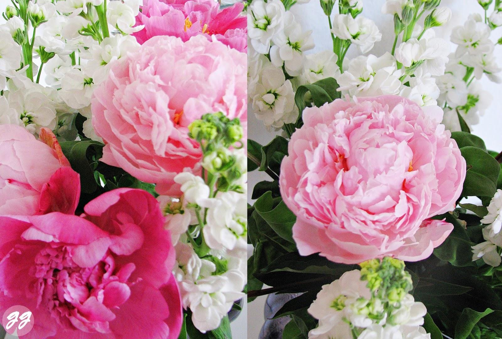 Welche Blumen Blhen Im Mrz blumen im m rz pflanzen die albumrundung fr hlingsblumen der alb