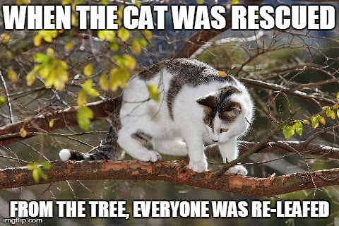 Cat pun and tree pun in one! Bonus points.
