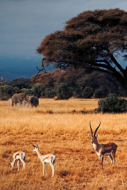Amboseli National Park, Kenya | PLAN YOUR VACATION IN KENYA